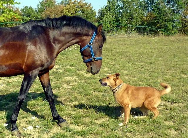 Tierversicherung für Hund und Pferd