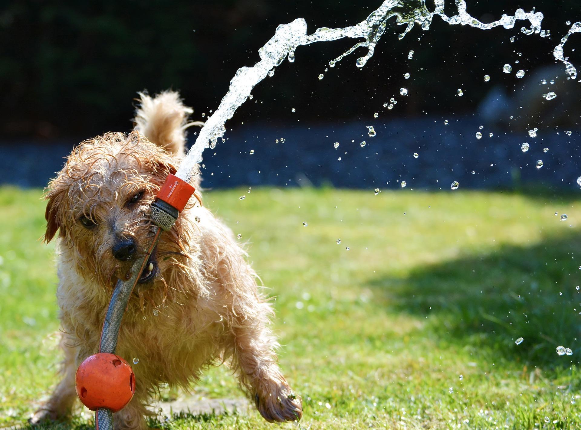 Hundehaftpflichtversicherung: Damit aus Spiel nicht bitterer Ernst wird